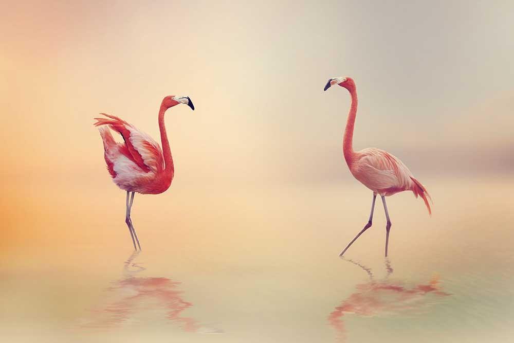 Obraz do salonu flamingi w pięknym pastelowym świetle - obrazy, fototapety, plakaty